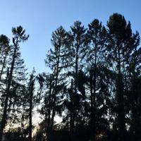 Création et entretien d'espaces verts, entretien du jardin, abattage-élagage